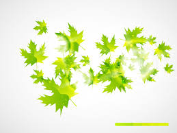 Abstract Leaves Backgrounds Abstract Colors Green Grey Nature
