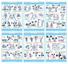 Weight And Exercise Chart Weight Training Exercise Chart Series A2 Laminated Set Of