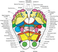 the pads are worn on the feet for a couple of reasons the feet are considered in oriental medicine to be the second heart that is they help pump