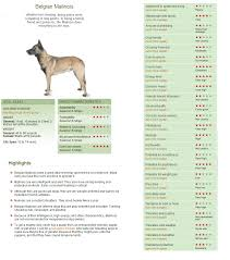 Pin By Carol Brown On Pets Malinois Dog Australian Cattle