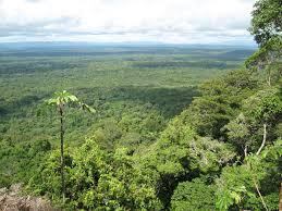 Природа растения и животные Южной Америки Растительный мир Южной Америки