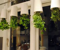 ... Large-size of Gorgeous Images About Garden On Gardens Window Boxes Hanging  Herbgarden Kitchen Hanging ...