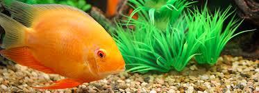 petsmart animals fish. Perfect Petsmart Article Hero Image In Petsmart Animals Fish T