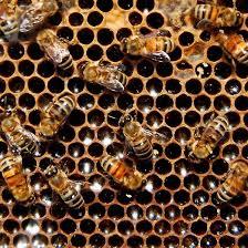 Resultado de imagen para imagenes de una colmena de abejas