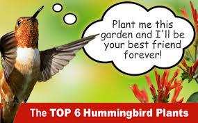 Small Picture Free Hummingbird Garden Design from Wilson Bros Gardens