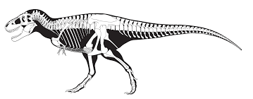 Small Picture Fascinating T Rex Skeleton Drawing 8 mosatt