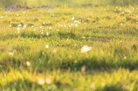 grass field sunset. Close Up Shot Of Glowing Grass Field At Sunset Stock Photo - 84886416
