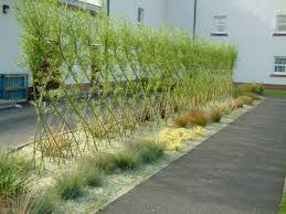 Living Privacy Fence Garden Design Garden Design With Privacy Fence In Backyard Plant