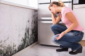 how to permanently banish mould from