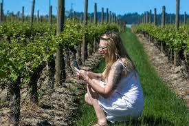 a woman photographs a g vine at adelsheim vineyard