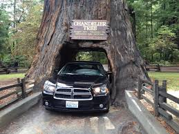 chandelier tree leggett ca leggett california one of the few