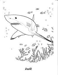 great white shark coloring pages shark color pages shark pictures to print and color great white