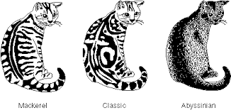 Tabby Patterns Fascinating A Trait Is Some Aspect Of An Organism That Can Be Described Or Measured