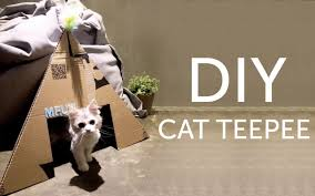 diy a cardboard cat tee for our persian x maine kitten