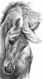 wild horse drawings in pencil. Beautiful Wild Hard To Track This Artist Down Possibly By Heidi Kriel Of South  Africa Graphite To Wild Horse Drawings In Pencil S
