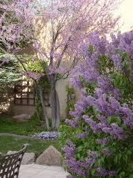 Lilacs In Landscape Design Pin By Garden Ideas On Flowers And Plants Flower Landscape