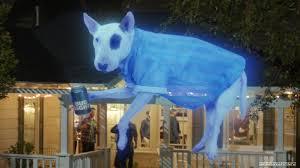 Bud Light Dog Driving Commercial
