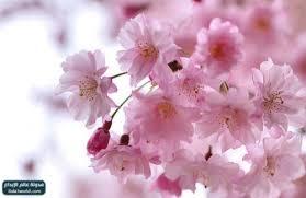 نتيجة بحث الصور عن صور زهور