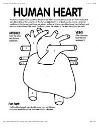 Small Picture Human Heart Coloring Page esonme