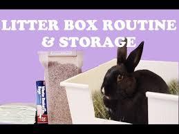 rabbit litter box set up routine
