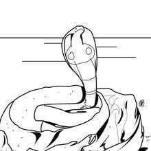 Small Picture SNAKE coloring pages 12 free REPTILES coloring pages online