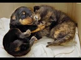 cute puppies and kittens kissing. Modren Puppies Puppies And Kittens Kissing Compilation 2015 NEW Inside Cute YouTube