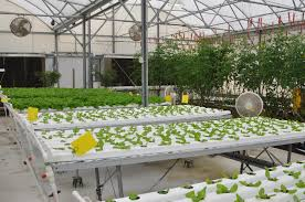 best images about john e polk correctional facility on 17 best images about john e polk correctional facility aquaponics system growing plants and raising