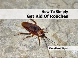 how to get rid of roaches in the kitchen bjyoho com