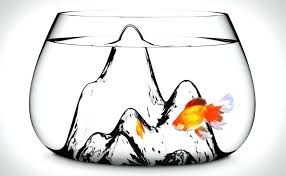 cool fish bowls for large in bulk uk