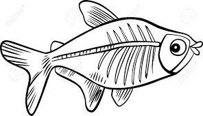 Small Picture Tetra Fish Coloring Pages Coloring Coloring Pages