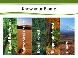 What Are Biomes Meaning And Classification Of Biomes Vnaya Com