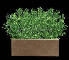 boxwood plant artificial boxwood plants outdoors