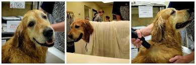 visit mydoglikes to see how to dry a dog after a bath properly hint