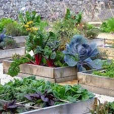 Make a Terrace Vegetable Garden on your roof top, it is easy if you'll do  this with some planning. In this article you'll learn which vegetables are  ...