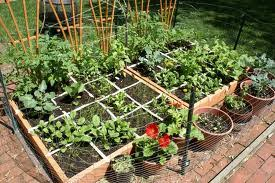 container garden vegetables.  Container Squarefootgarden For Container Garden Vegetables R
