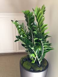 modern office plants. Modern Office Plants
