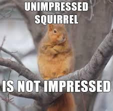Memes Vault Unimpressed Dog Memes via Relatably.com
