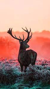 Cute Deer Wallpaper - KoLPaPer ...
