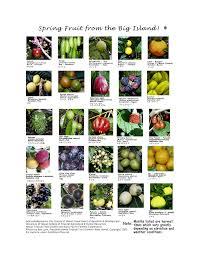 tropical fruit names.  Fruit Spring Fruit On The Big Island Throughout Tropical Names U