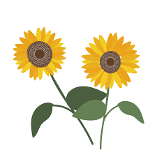 夏の花ひまわりヒマワリの フリー イラスト 商用フリー無料の