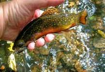 Alan Petrucci's Fly Fishing Pictures | Fly dreamers