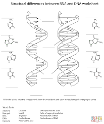 rna and dna worksheet coloring pages dna coloring worksheet free worksheets library download and on double helix coloring worksheet key