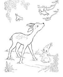 Small Picture Deer Coloring Page Wild Animal Buck Deer Coloring Pages and Kids