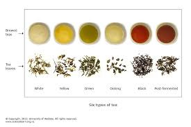 The Science Of Tea Science Learning Hub