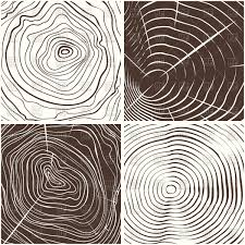 Wood Vector Texture Wood Rings Texture Or Tree Rings Vector Illustration Of Backgrounds