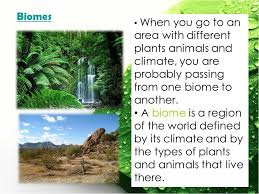 What Are Biomes B 4 4 What Are Biomes Vocabulary Biome Ppt Video Online