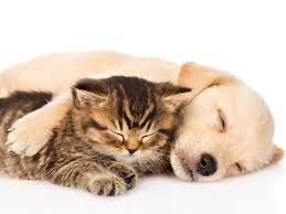 puppies and kittens sleeping. Fine Puppies Picture Puppy Kittens Retriever Cats Dogs Sleep Animals 2048x1536 Kitty Cat Intended Puppies And Sleeping