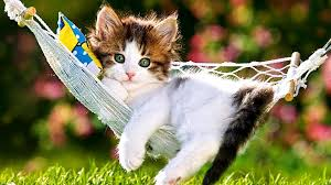 cute kittens playing wallpaper. Simple Playing Cute Kitten In Hammock With Kittens Playing Wallpaper W