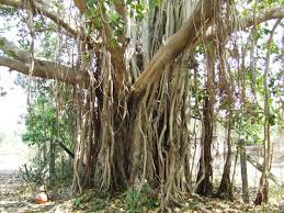 Image result for tree pictures with names