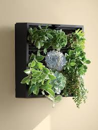 Vertical Herb Garden In Your Kitchen Living Wall Planter Green Wall Vertical Garden